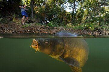 carp_fishing
